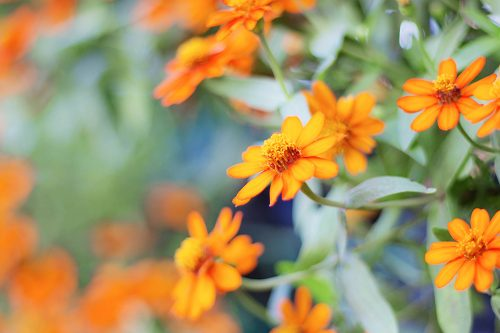 orange flowers with nature.